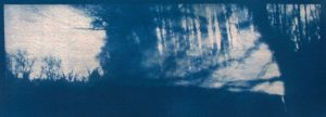 Moodboom a, 2014, cyanotype, 36 x 13 cm