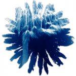 Blaasbloem, 2018, 30 x 40 cm, cyanotype op aquarelpapier