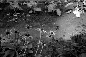 Serie gemaakt in de tuin van Villa Augustus te Dordrecht, augustus 2018